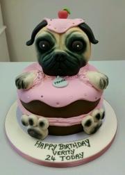 Pug in a cake