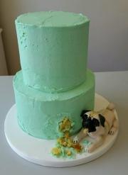 Pug eating cake